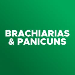 ícone-brachiarias e panicuns